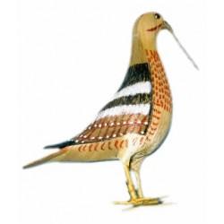 Pájaro de esparto pico largo